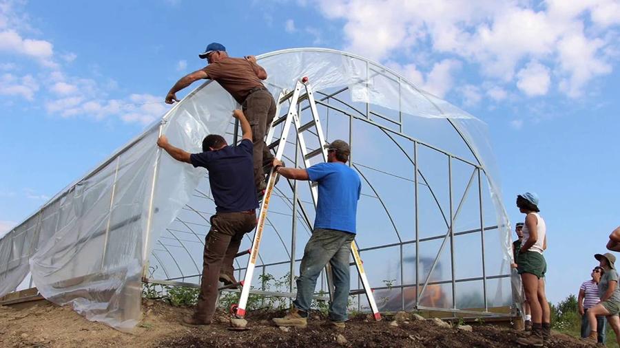 Một nhà kính trồng rau đơn giản sẽ phù hợp với nhiều hộ gia đình
